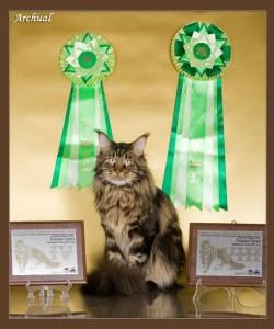 Подведены итоги сводного российского рейтинга за 2012-2013 год, Юпитер вошел в 10-ку лучших в России (8-е место) и в 5-ку лучших взрослых животных (4-е место)!!! Иветт вошла в пятерку лучших котят, 5-е место!!!