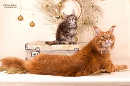 Новогодние фото наших выпускников и котят питомника! Всех владельцев наших выпускников, и нынешних, и будущих с наступающим Новым Годом!