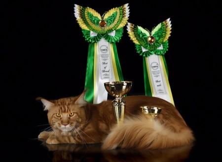 Лучший в породе! Лучший кот мейн кун! С такими результатами выступил наш выпускник Ричард на международной выставке в Павлодаре 27 марта.