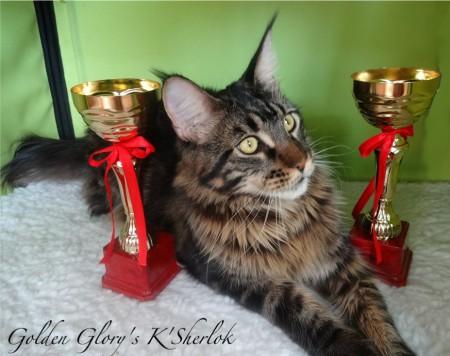 Наш выпускник Шерлок стал лучшим Премиором выставки два дня! 2 отличные оценки CAPY и 2 nom Bis!