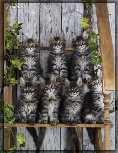Посмотрите на наших малышей помета О, свободны две кошечки и один котик, вся информация в разделе